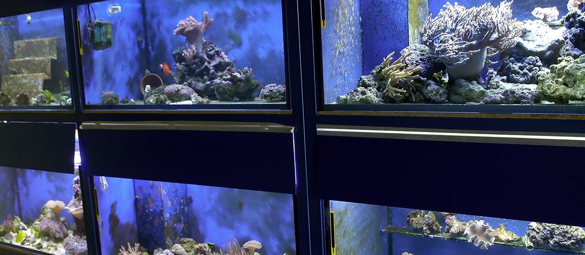 best-aquarium-pump