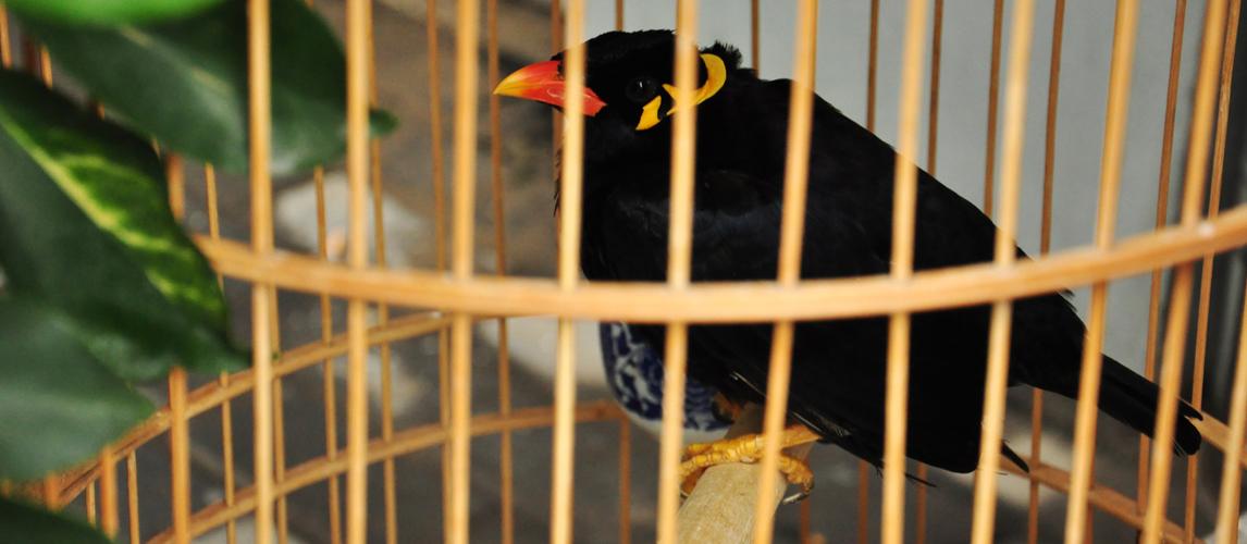 best-bird-cage