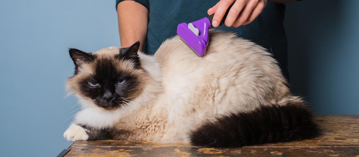best-cat-brush