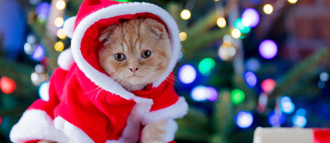 best-cat-christmas-costumes