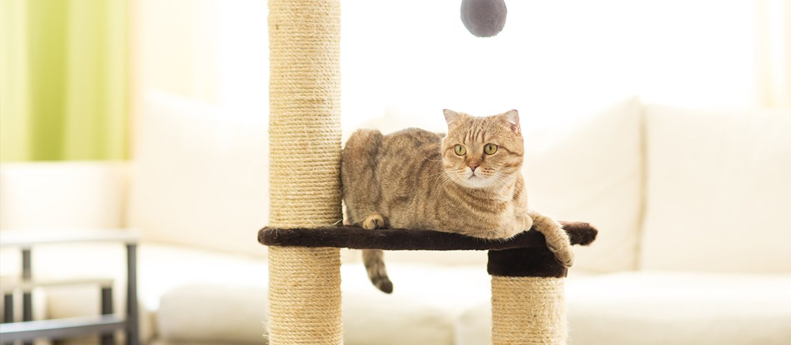best-cat-scratching-towers