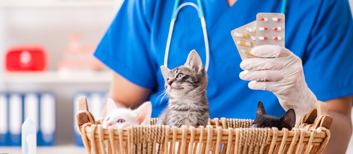 best-cat-supplements