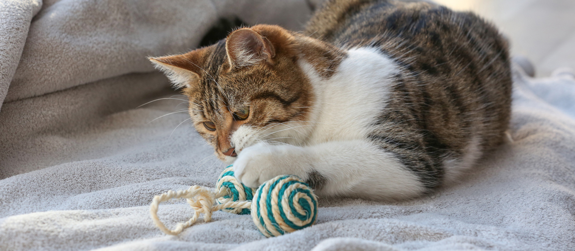 2ddd759b029f The Best Cat Toys (Review) in 2019 | My Pet Needs That