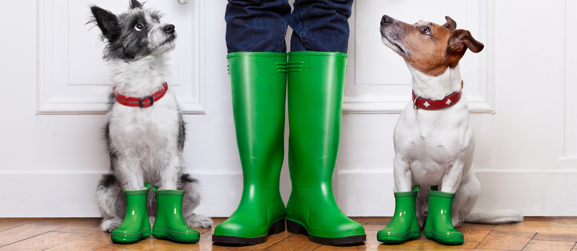 best-dog-boots