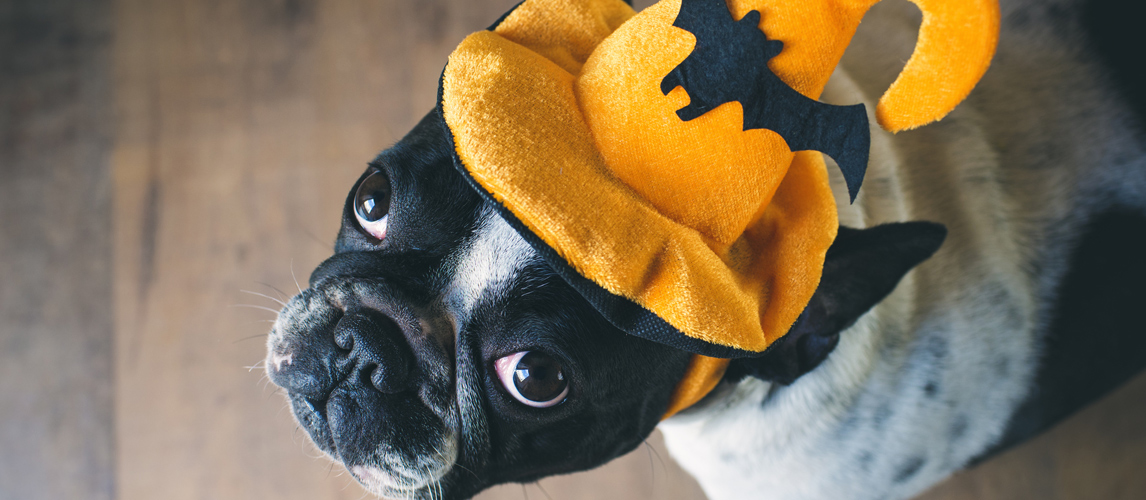 2541d1774ff4 The Best Dog Costumes For Halloween (And Everything Else)