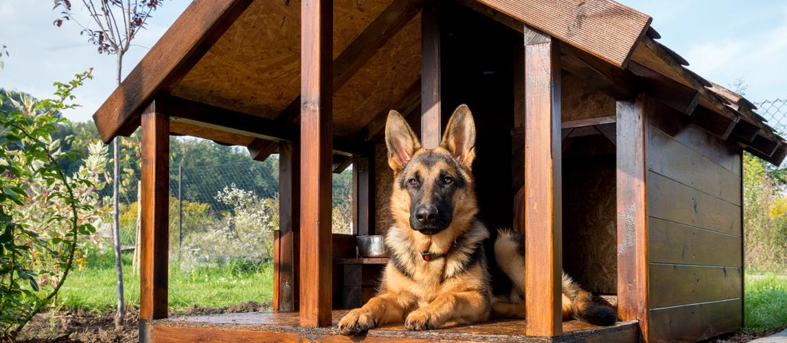 best-dog-house