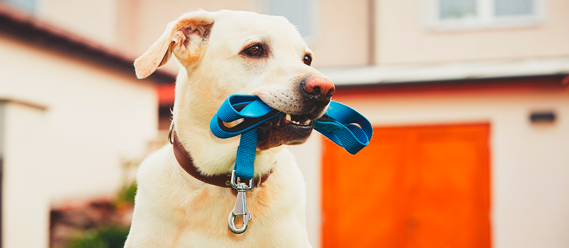 The Best Dog Leashes (Review) in 2019 | My Pet Needs That