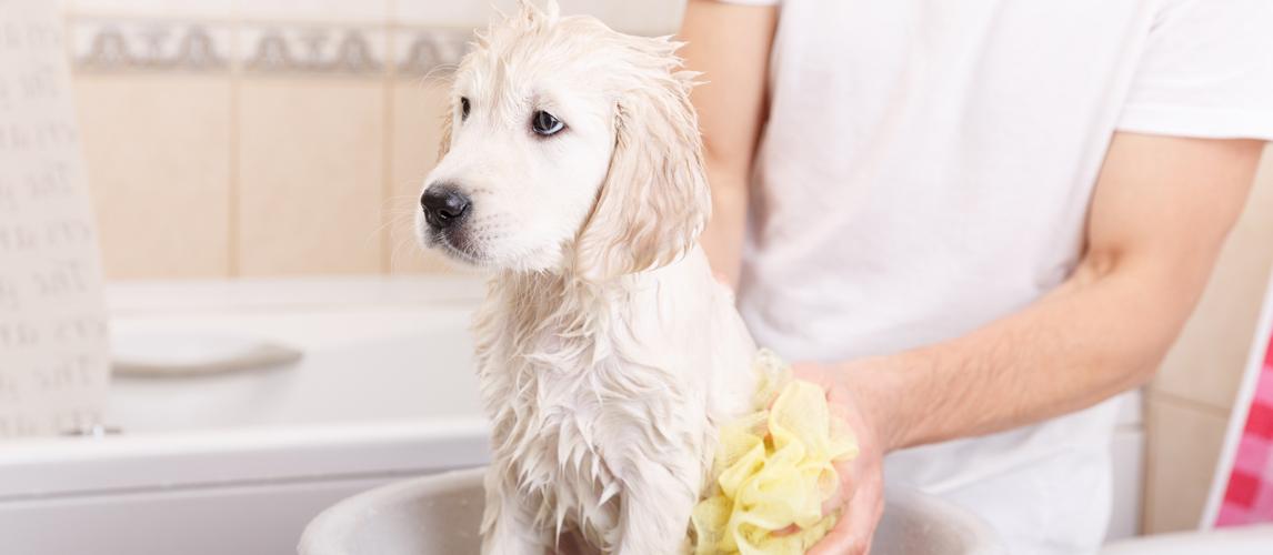 best-dog-medicated-shampoo