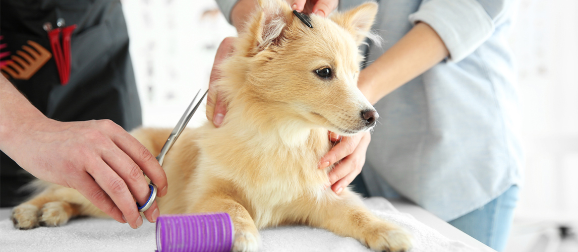 best-dog-thinning-shears