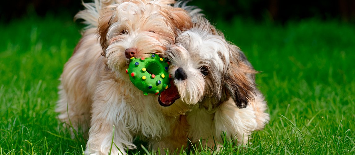 The Best Dog Toys of 2019 (Buying Guide) | My Pet Needs That