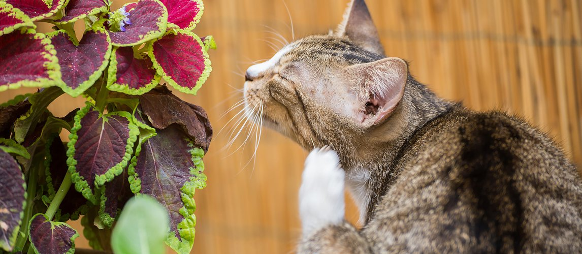 best-flea-treatment-for-cats