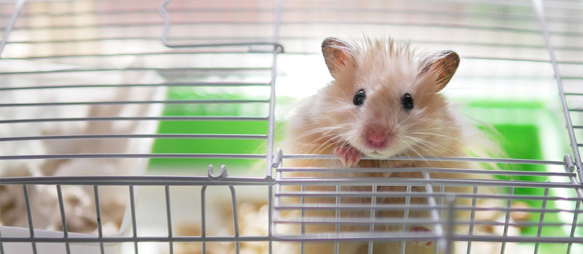 best-hamster-bedding