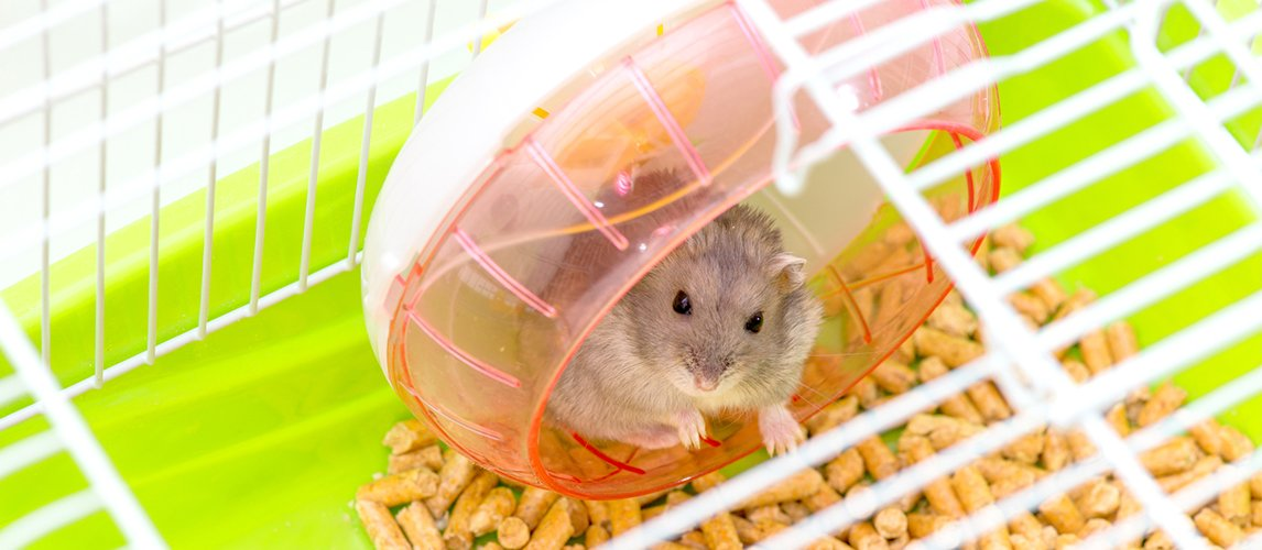 The Best Hamster Cage Accessories (Review) in 2019