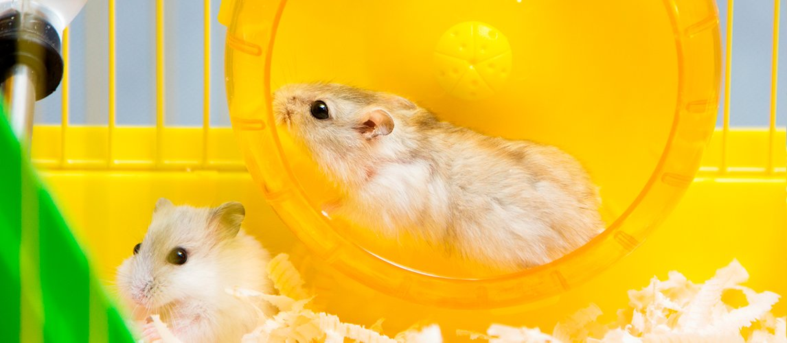 best-hamster-wheels