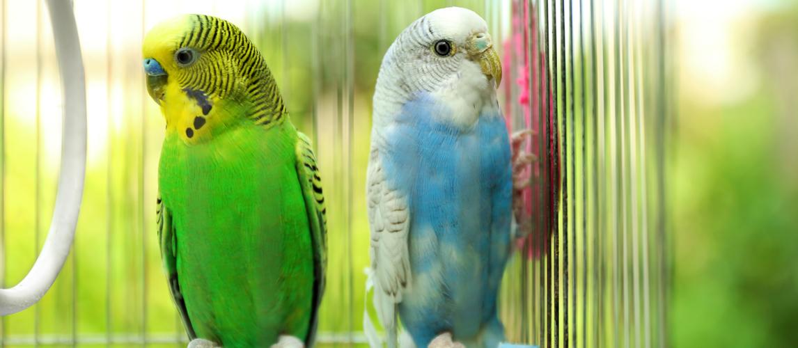 best-parakeet-toys