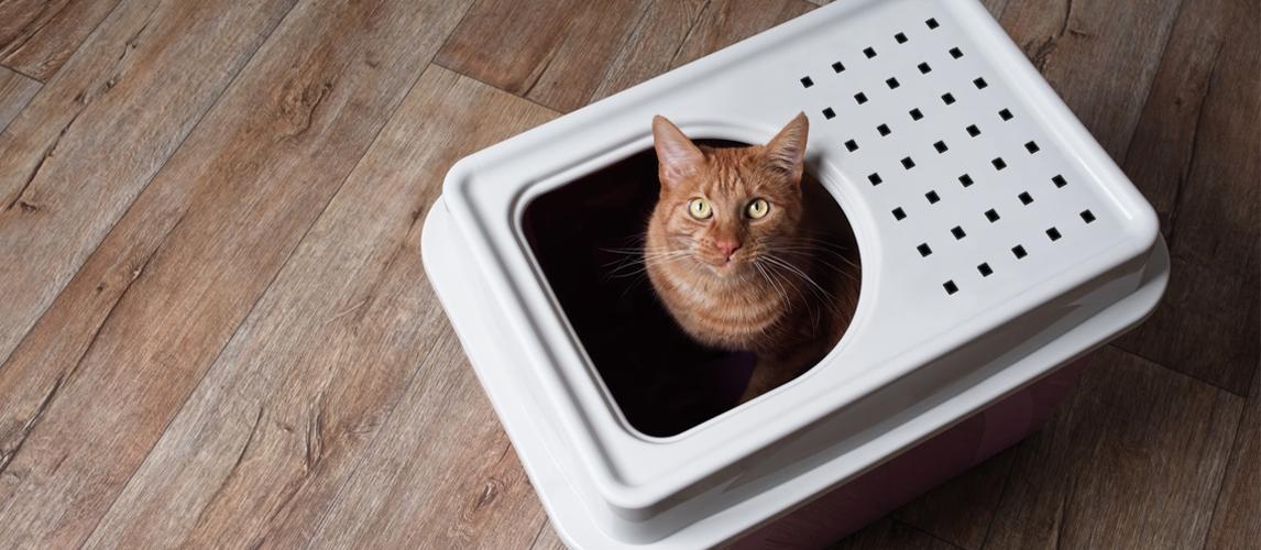 best-self-cleaning-cat-litter-box
