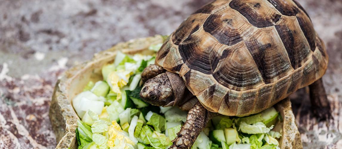 best-turtle-food