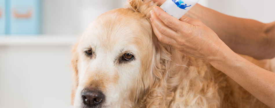 The Best Dog Ear Cleaners (Review) in 2019 | My Pet Needs That