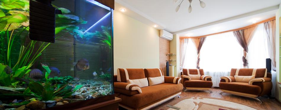 fish tank at home