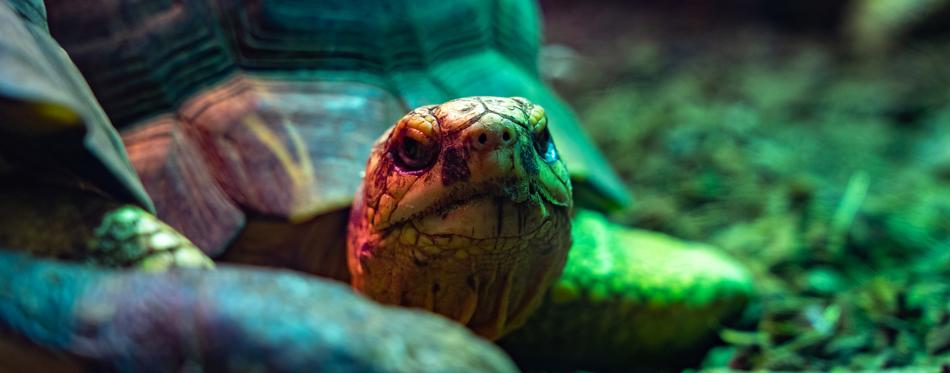 tortoise filter