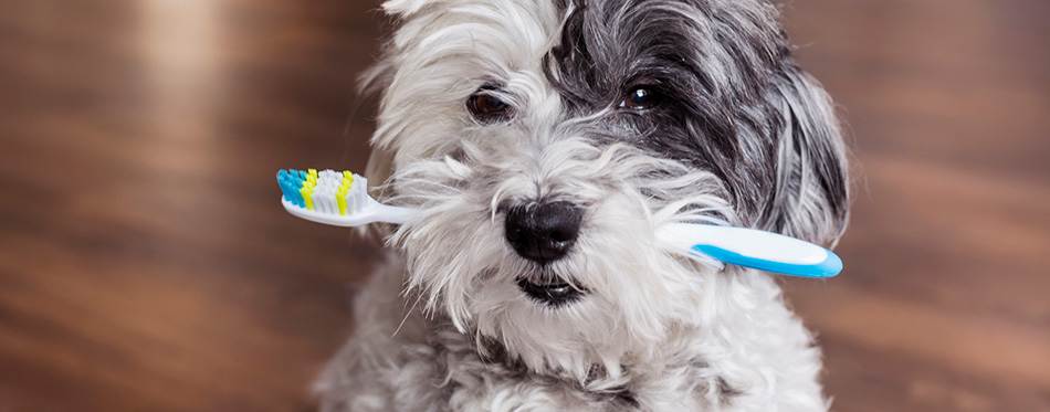 The Best Dog Toothbrushes Review In 2020 My Pet Needs That