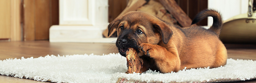 5-Things-Your-Puppy-Cant-Live-Without