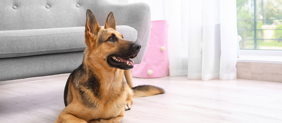 Best-Air-Purifiers-for-Pets1