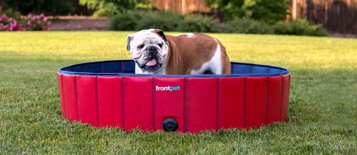 Best-Dog-Pool