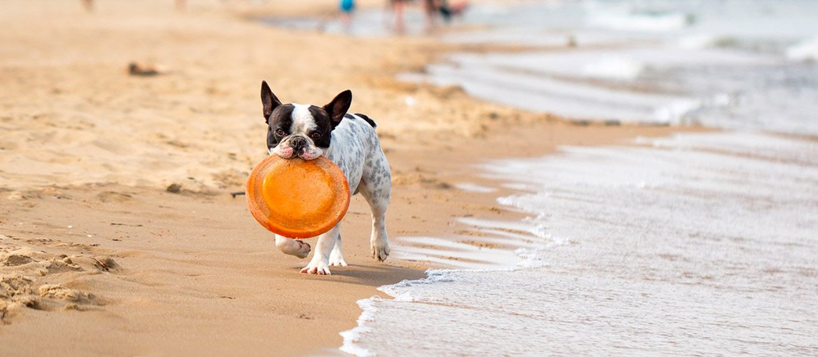 Best-Frisbee-for-Dogs-1