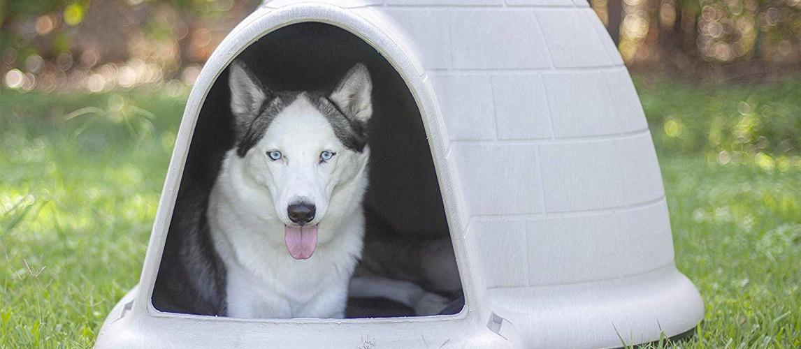 Best-Igloo-Dog-House-1