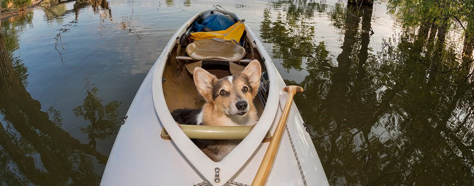 The Best Kayaks for Dogs (Review) in 2019 | My Pet Needs That