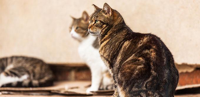 Cute stray cats