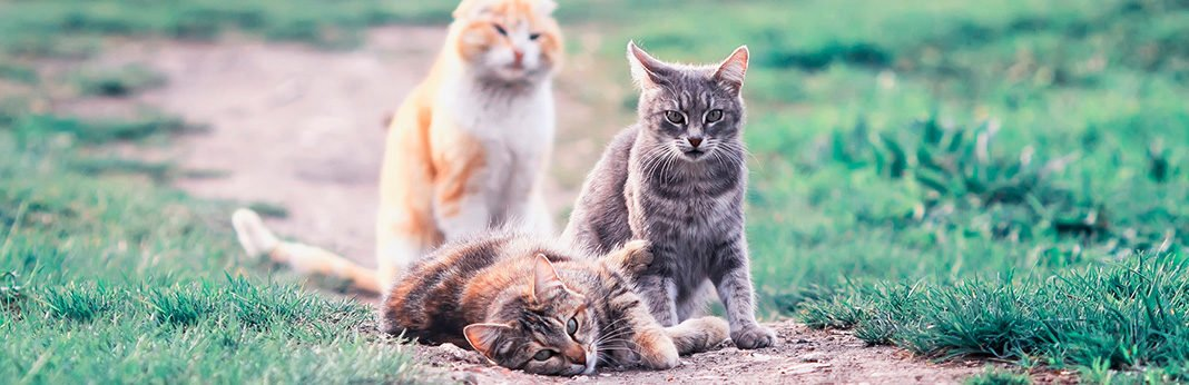 Differences Between Male and Female Cats