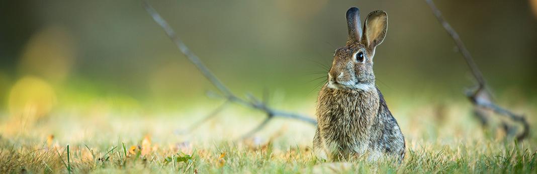 Do-Rabbits-Make-Noise
