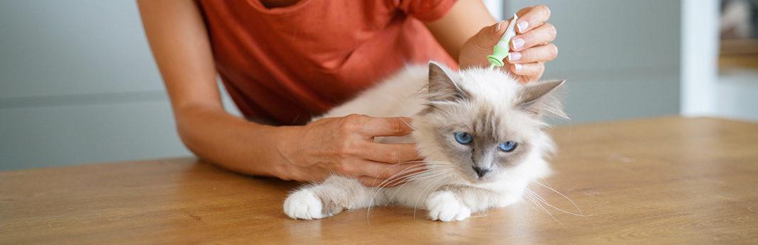 How Do Cats Get Fleas