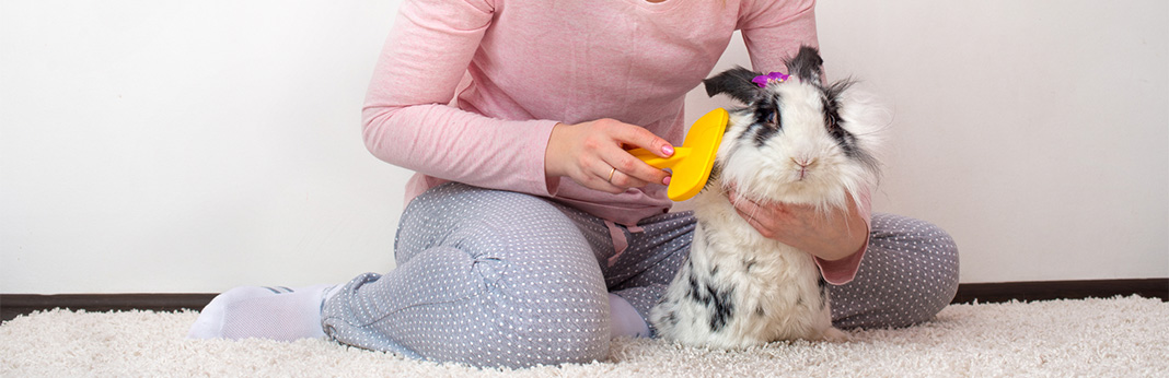 How-To-Groom-A-Rabbit1