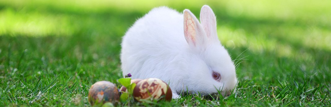 How-to-Take-Care-of-a-Baby-Bunny