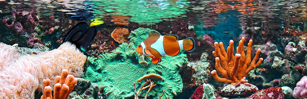 Saltwater Fish: Everything You Need to Know Before Getting One