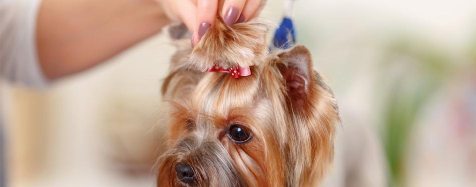 accessorize dog hair