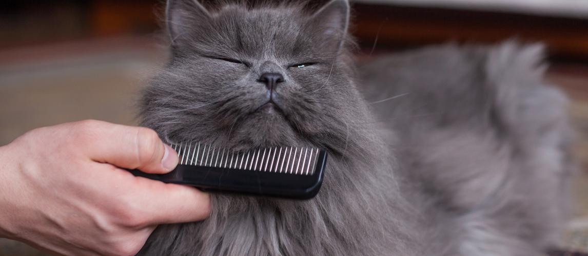 beat-flea-comb-for-cats