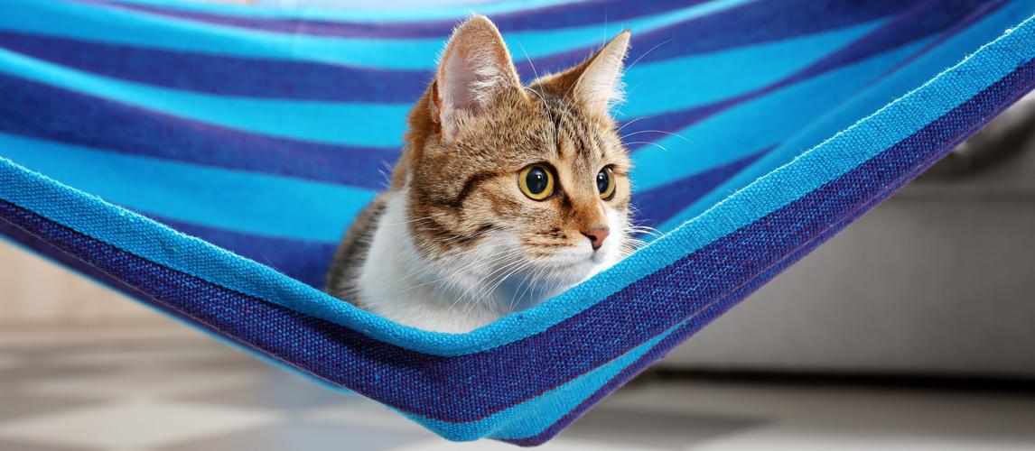 best-cat-hammock