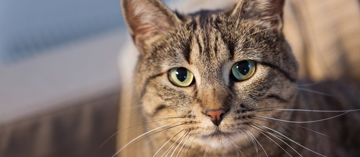 best-cat-muzzle