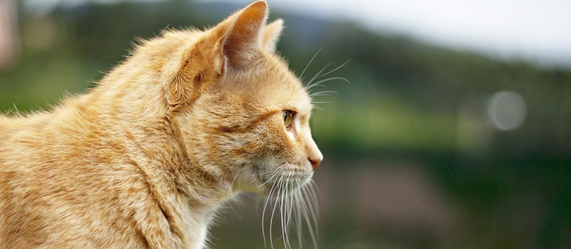 best-cat-vitamins