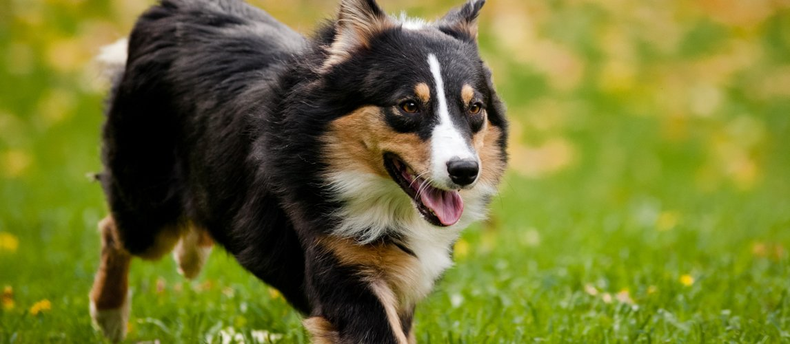 best-cranberry-supplements-for-dogs