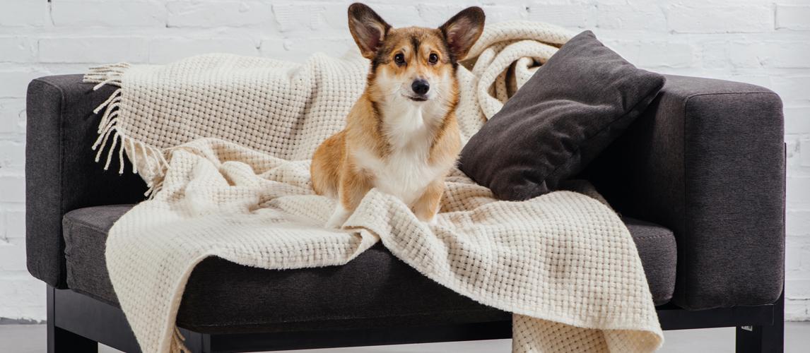 best-dog-blanket