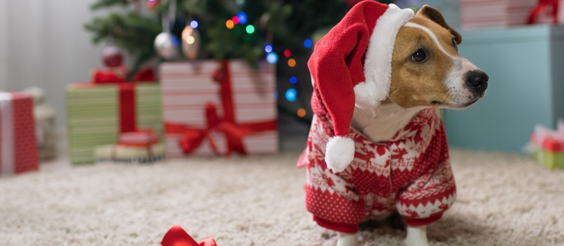 The Best Dog Christmas Outfits (Review) in 2021