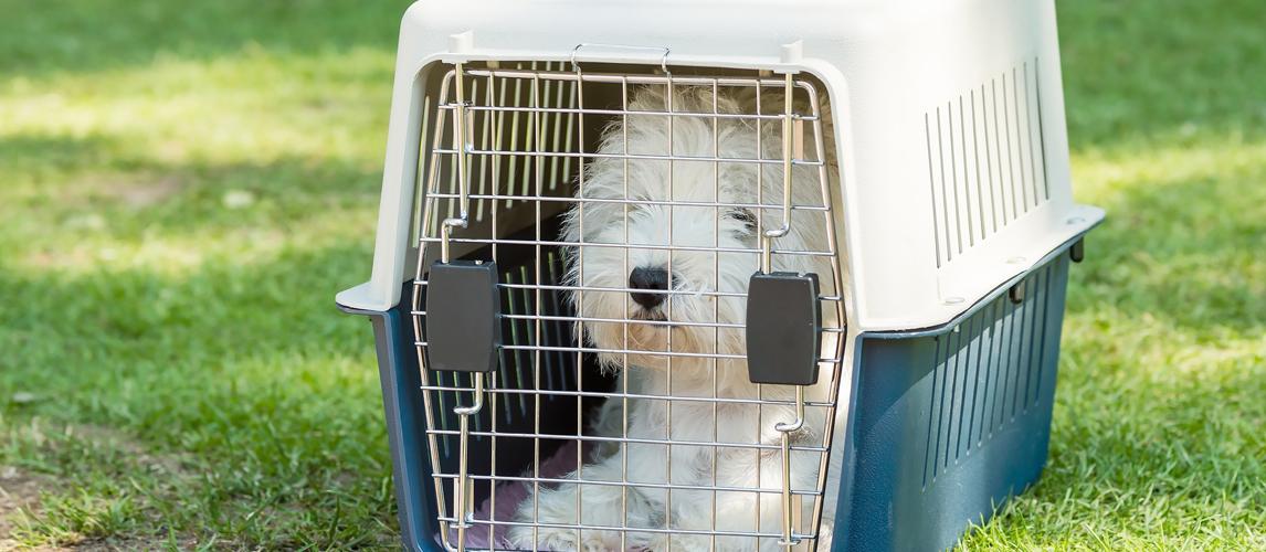 best-dog-crate