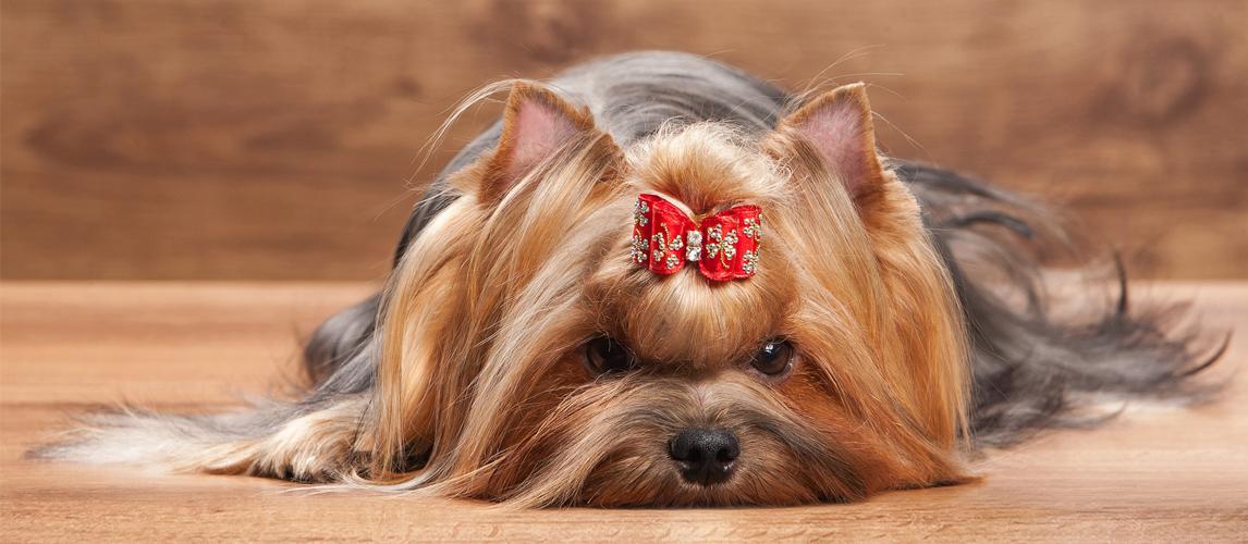 best-dog-hair-bow
