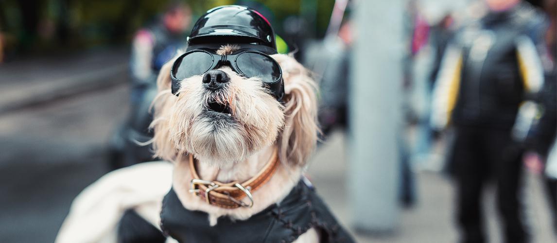 best-dog-motorcycle-helmet