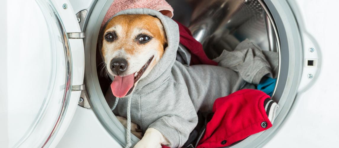 best-dog-sweater